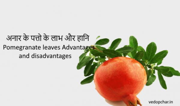 Pomegranate leaves Advantages and disadvantages|अनार के पत्तो के लाभ और हानि