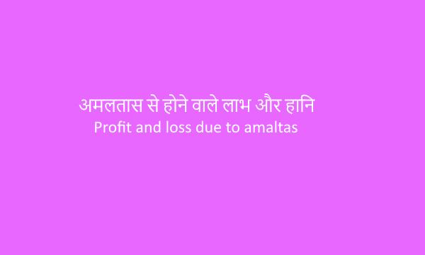 Profit and loss due to amaltas|अमलतास से होने वाले लाभ और हानि