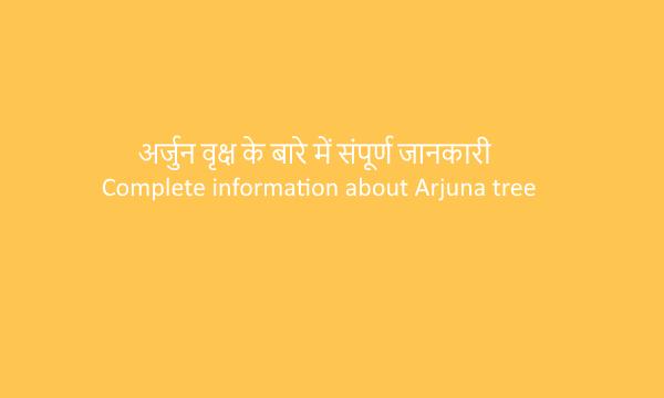 Complete information about Arjun tree|अर्जुन वृक्ष के बारे में संपूर्ण जानकारी