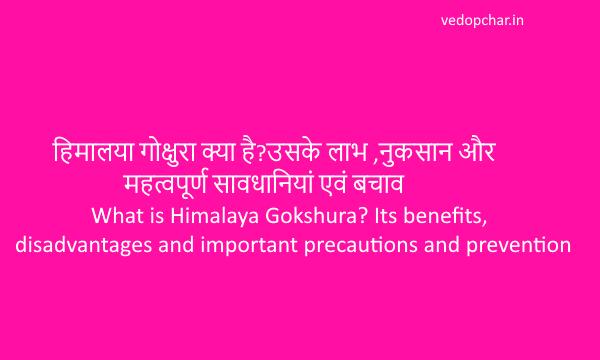 हिमालया गोक्षुरा क्या है?उसके लाभ ,नुकसान और  महत्वपूर्ण सावधानियां एवं बचाव(What is Himalaya Gokshura? Its benefits, disadvantages and important precautions and prevention)
