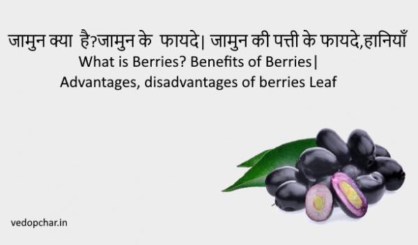 जामुन(black plum) क्या  है ,फायदे| जामुन की पत्ती के फायदे,हानियाँ