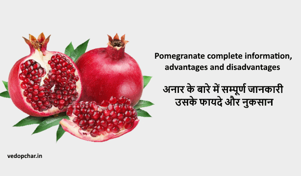 Pomegranate complete information, advantages and disadvantages