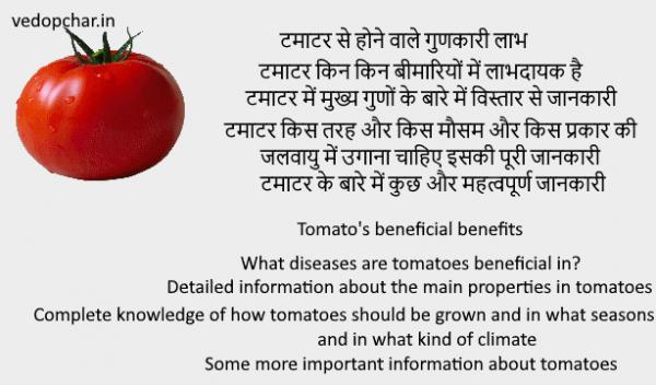 Tomato(टमाटर) के बारे में पूरी जानकारी और उससे होने वाले लाभ