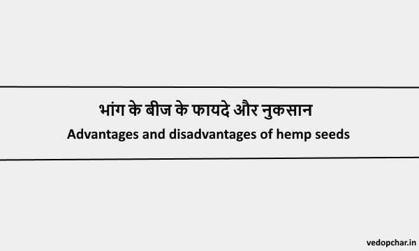 Hemp Seeds in hindi:भांग के बीज के फायदे और नुकसान
