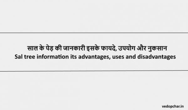 Sal Tree in hindi:साल के पेड़ की जानकारी इसके फायदे, उपयोग और नुकसान