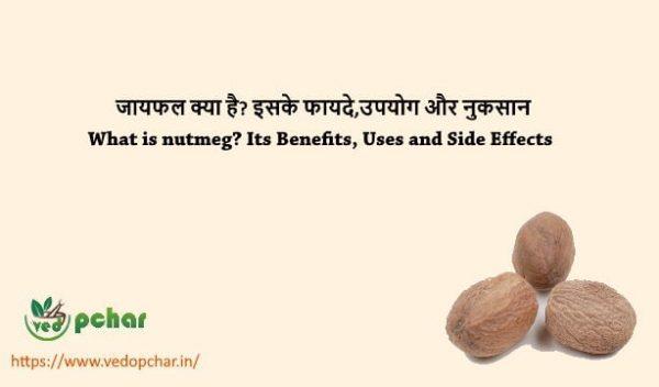 Nutmeg in Hindi : जायफल क्या है? इसके फायदे,उपयोग और नुकसान