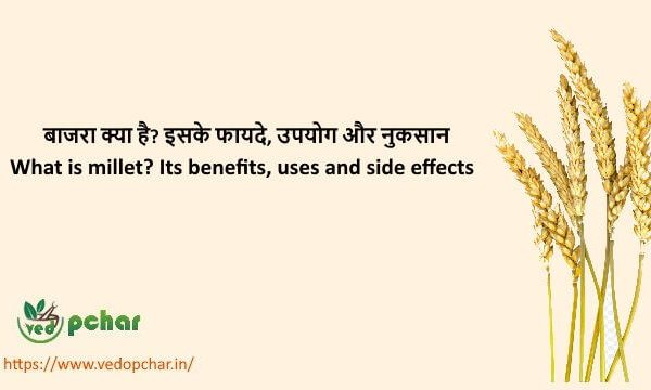 Millet in Hindi : बाजरा क्या है? इसके फायदे, उपयोग और नुकसान