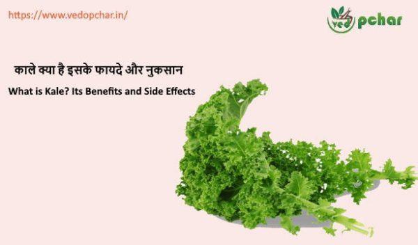 Kale in hindi : काले क्या है इसकी सम्पूर्ण जानकारी