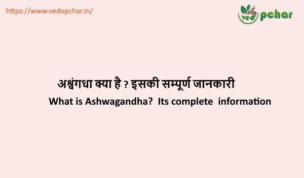 Ashwagandha in hindi : अश्वंगधा क्या है ? इसकी सम्पूर्ण जानकारी